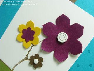 Hip Hip Horray Flower Closeup
